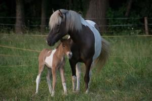 PferdeJuli.August 15 075