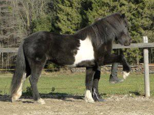 impuls-pferd-2