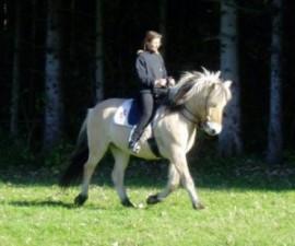 impuls-pferd-3